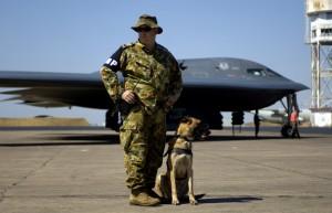 Cane militare addestrato