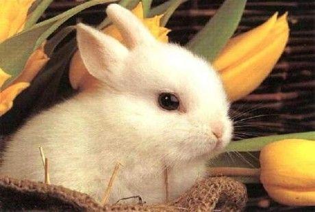 Animali da compagnia: perchè non scegliere il coniglio?