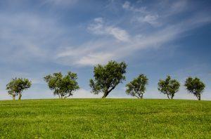 trees-790220_960_720