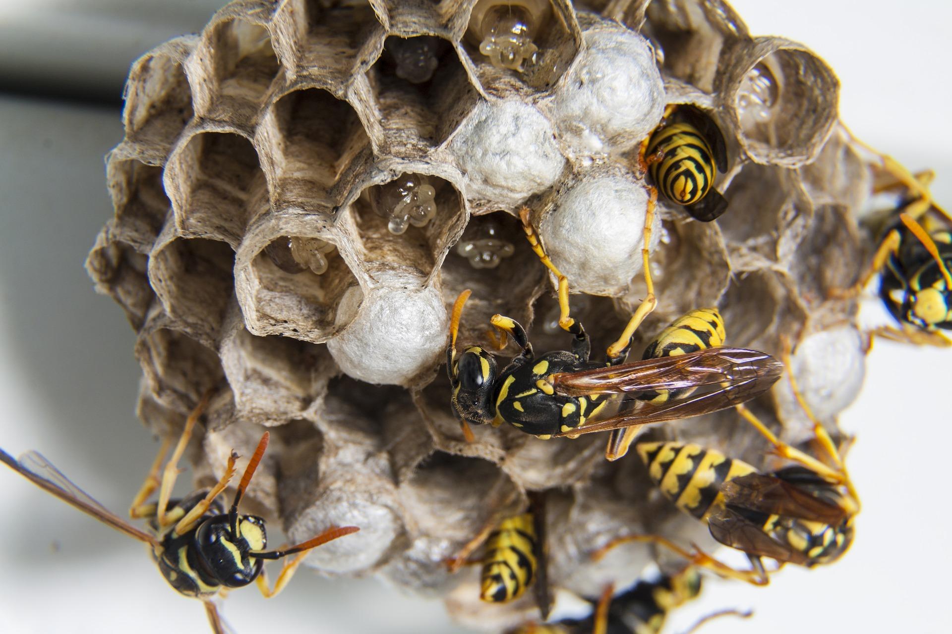 1 swarm-1903243_1920
